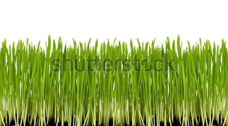 Zöld fű friss izolált fehér tavasz fű Stock fotó © Johny87