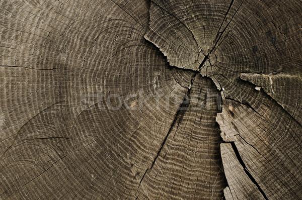 Vieux arbre anneaux texture vieux bois Photo stock © Johny87