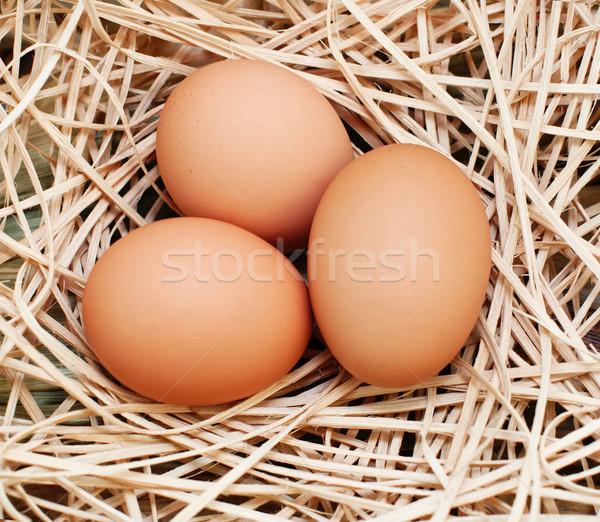 Drie bruin eieren mand voorjaar Stockfoto © Johny87