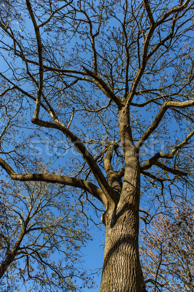 Automne arbre laisse ciel bleu naturelles famille Photo stock © Johny87