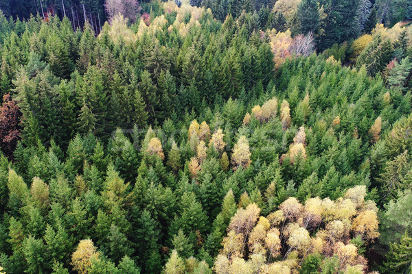 Aerial view of forest Stock photo © Johny87