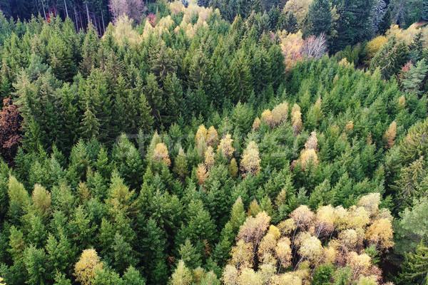 лес впечатляющий сосна природы фон Сток-фото © Johny87