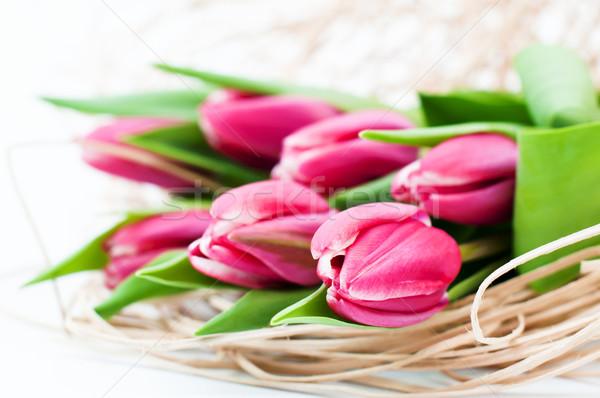 Rosa tulipa decoração primavera fundo verde Foto stock © Johny87