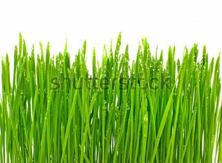 Groen gras dauw druppels geïsoleerd witte voorjaar Stockfoto © Johny87