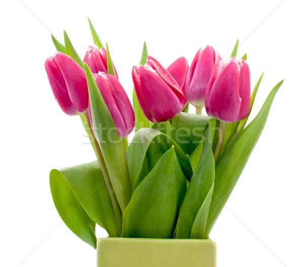 Pink tulip  Stock photo © Johny87