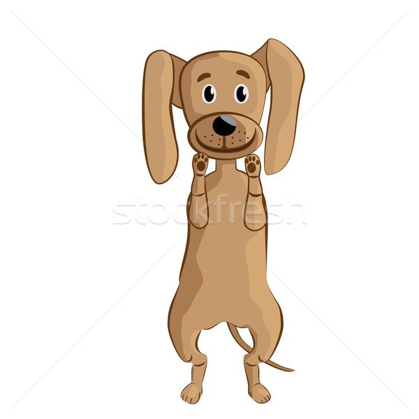 Köpek örnek komik ayakta yalıtılmış Stok fotoğraf © jomaplaon