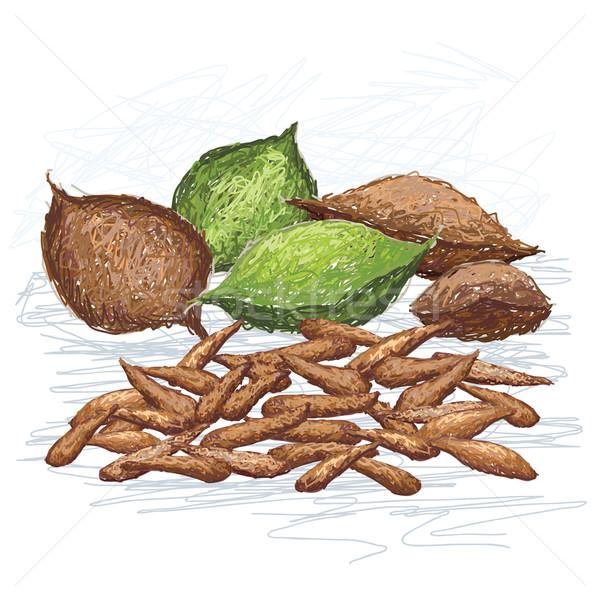 Nueces ilustración frutas científico nombre aislado Foto stock © jomaplaon
