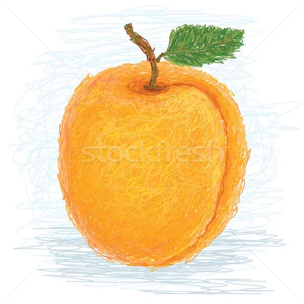 Albaricoque primer plano ilustración frescos frutas alimentos Foto stock © jomaplaon