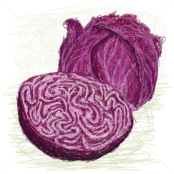 красный капуста поперечное сечение иллюстрация свежие Сток-фото © jomaplaon