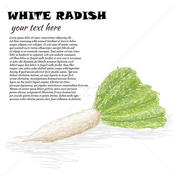 Blanco rábano primer plano ilustración frescos vegetales Foto stock © jomaplaon