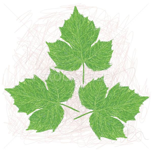 Yaprakları örnek bilimsel ad yaprak salata Stok fotoğraf © jomaplaon