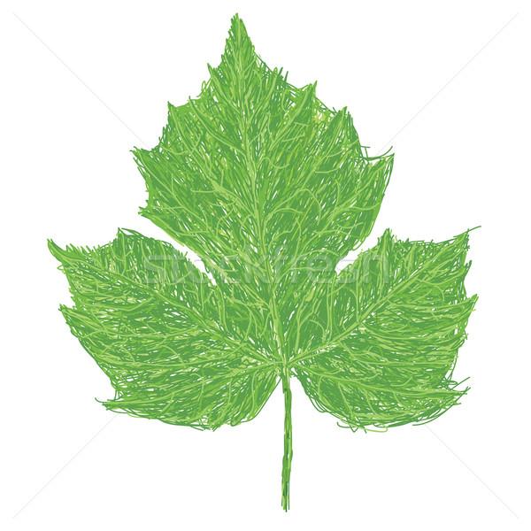 Yaprak örnek bilimsel ad yeşil pişirme Stok fotoğraf © jomaplaon