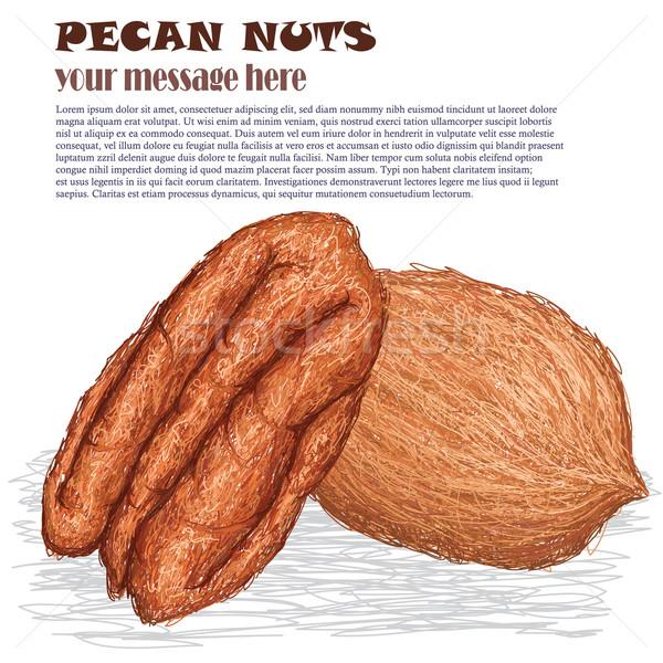 pecan nuts Stock photo © jomaplaon