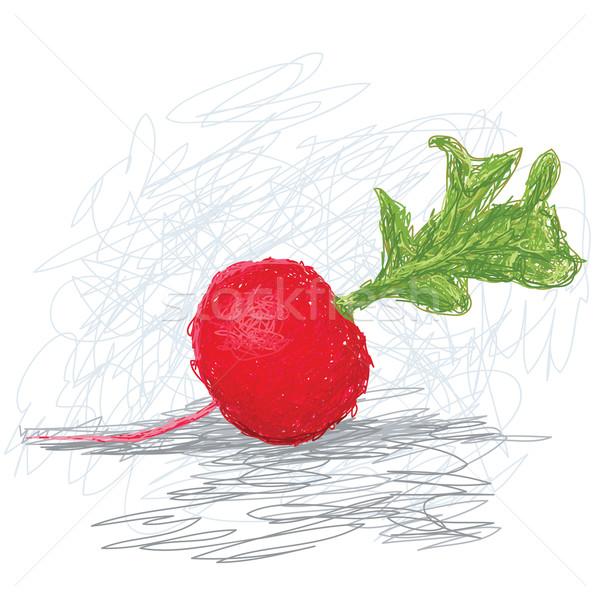 Rábano primer plano ilustración frescos vegetales naturaleza Foto stock © jomaplaon