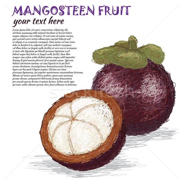 Мангостин фрукты иллюстрация свежие все Сток-фото © jomaplaon