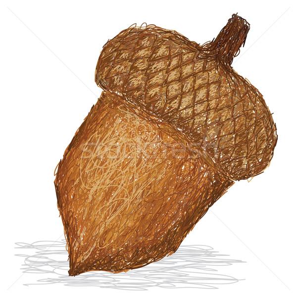 Bellota primer plano ilustración tuerca frutas otono Foto stock © jomaplaon