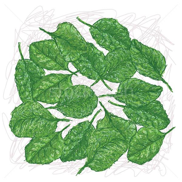 spinach Stock photo © jomaplaon
