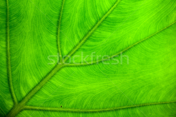 Yeşil yaprak doku ağaç bahar soyut yaz Stok fotoğraf © jomphong