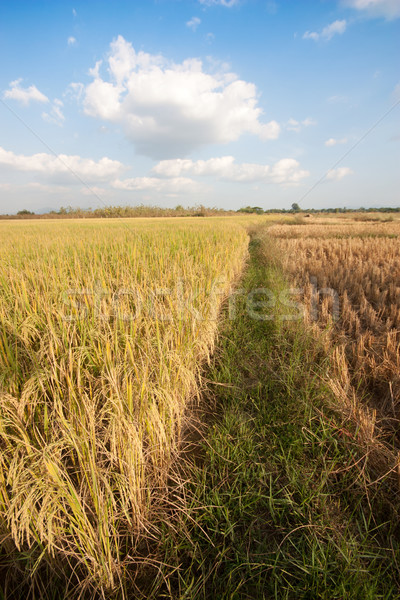 Tayland çim yaprak arka plan yaz Stok fotoğraf © jomphong