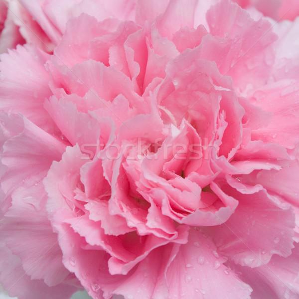 çiçek doğa bahçe yaz renk Stok fotoğraf © jomphong