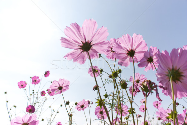 Tanımlama bahar bahçe sanat yaz Stok fotoğraf © jomphong