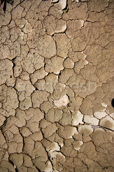Dry soil Stock photo © jomphong