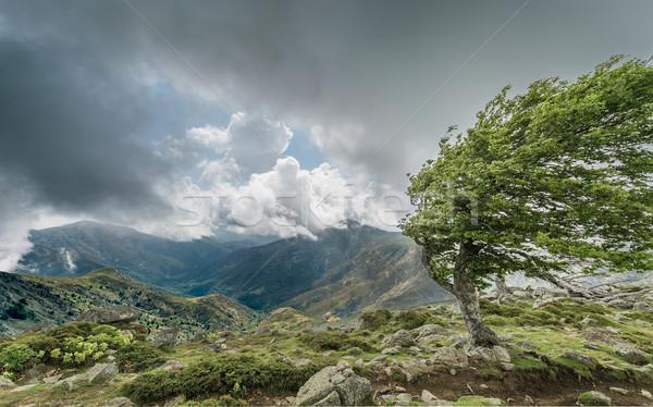 Ağaç dağ korsika izlemek karanlık uzak Stok fotoğraf © Joningall