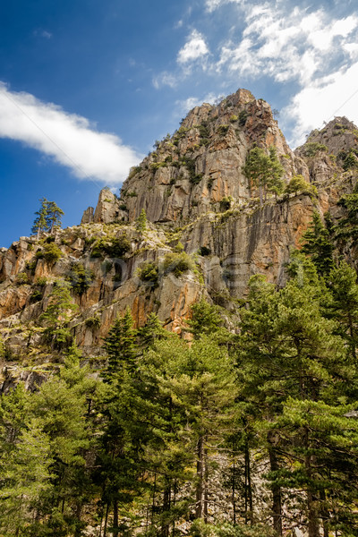 Rock corse dramatique pin arbres montagne Photo stock © Joningall