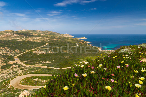 Flowers, maquis and La Revellata lighthouse in Corsica Stock photo © Joningall