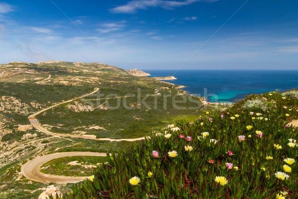 Virágok LA világítótorony Korzika távolság égbolt Stock fotó © Joningall