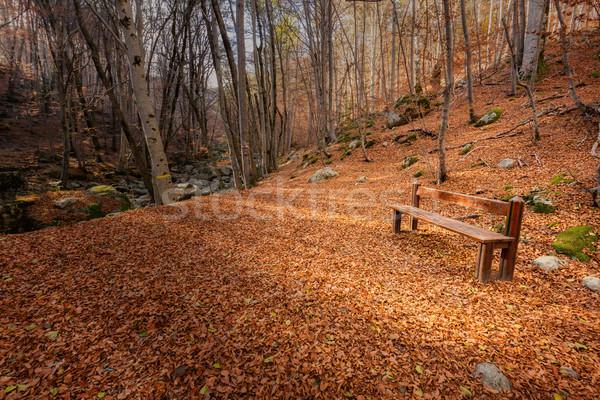 ストックフォト: 木製 · ベンチ · 紅葉 · 森林 · コルシカ島