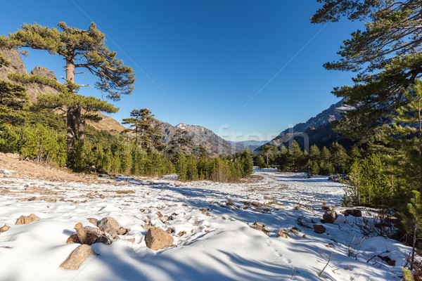 View of snow & mountains at Haut Asco in Corsica Stock photo © Joningall