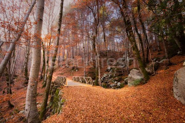 Camino dorado hojas de otoño puente forestales córcega Foto stock © Joningall