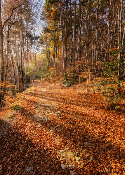 út arany őszi levelek erdő Korzika fák Stock fotó © Joningall