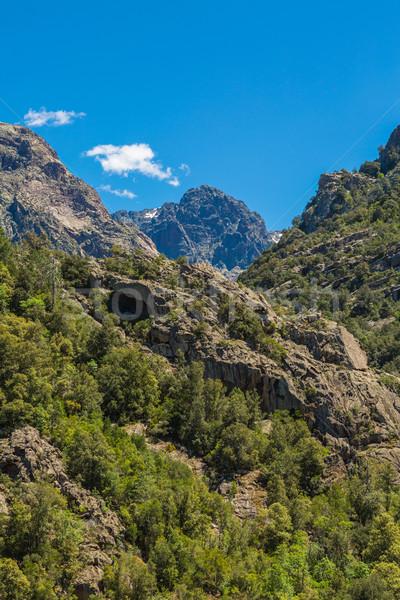 Korsika orman kuzey gökyüzü dağlar park Stok fotoğraf © Joningall