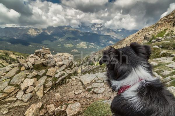 Бордер колли собака глядя из гор назад Сток-фото © Joningall