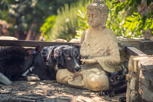 Dog and cat rest on a  Buddha statue on stone steps Stock photo © Joningall