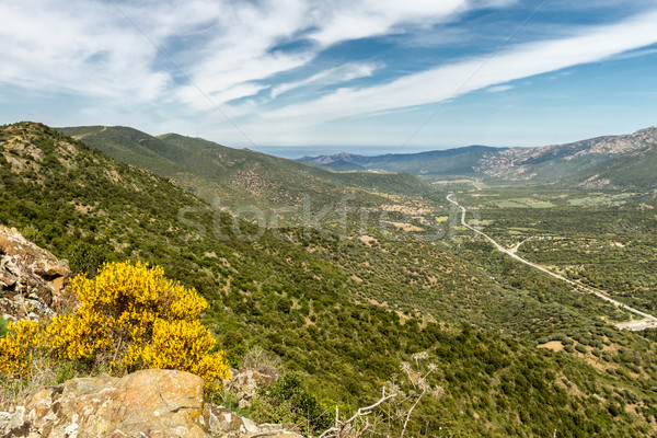 Route côte corse vallée fleurs jaunes premier plan Photo stock © Joningall
