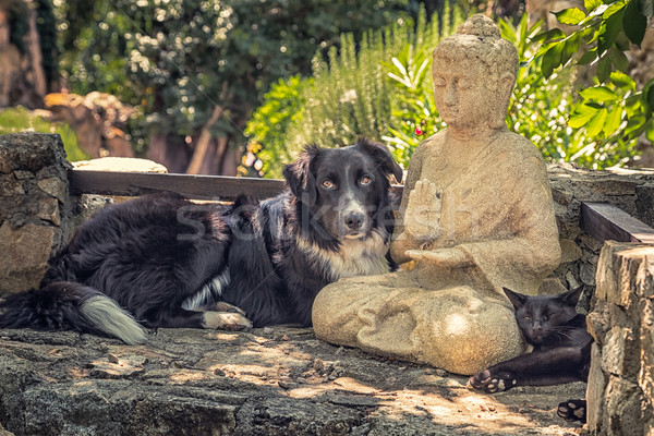 Chien chat buddha statue pierre étapes Photo stock © Joningall