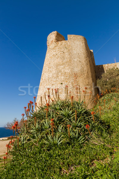 A flowering Aloe in front of the Citadel wall at Calvi in Corsic Stock photo © Joningall