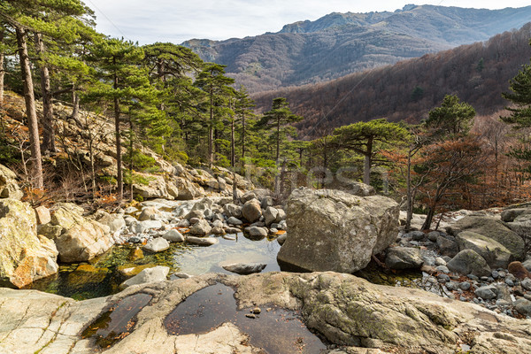 Bäume Berge Kaskade Korsika Ansicht Stream Stock foto © Joningall