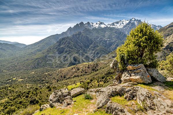 Görmek dağlar korsika kayalar çalı ön plan Stok fotoğraf © Joningall