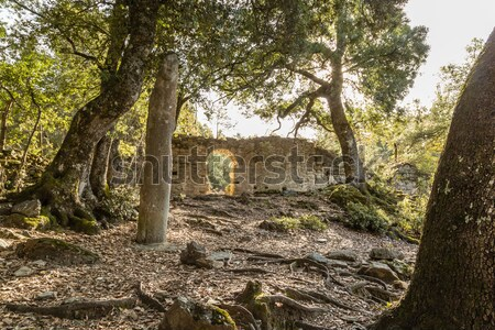 Stock photo: Ruins of ancient convent near Corsoli in Corsica