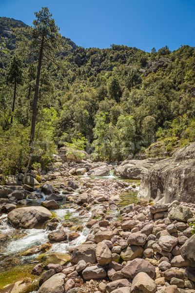 川 を実行して コルシカ島 森林 北方 水 ストックフォト © Joningall