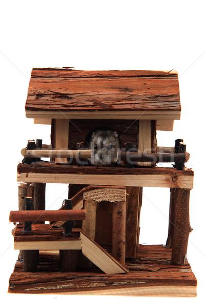 Natuurlijke houten huis speelgoed hamster geïsoleerd Stockfoto © jonnysek