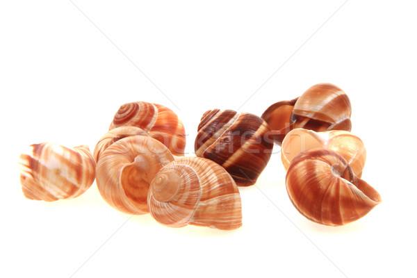 empty snail shells  Stock photo © jonnysek