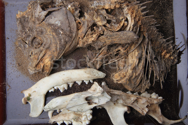 carp fish and pig head skeleton  Stock photo © jonnysek