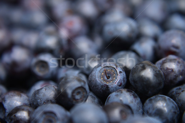 blueberries background Stock photo © jonnysek