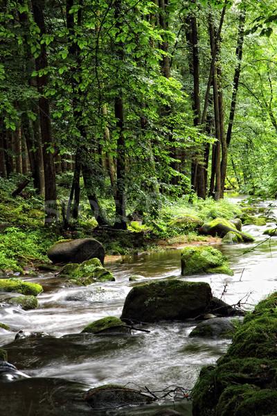 Klein rivier diep bos voorjaar Tsjechische Republiek Stockfoto © jonnysek