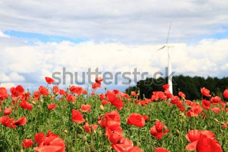 wind power and red flowers Stock photo © jonnysek
